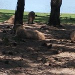 safari terrestre. algunos animales