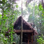 Jungle Caban