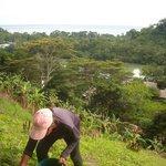 Manioc planting. Sea background