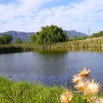 willow tree estate - lake