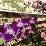 Orchids every where !!