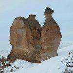 camel valley in capadoccia