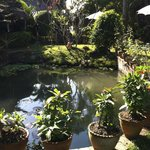 Thongbay's garden