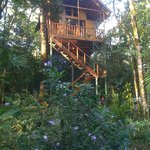 Our tree house.