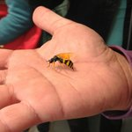 Mauro's prized piece: a yellow jacket. He said he would never sell it.
