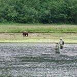 Fishing with Bears