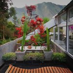 the orchid garden terrace