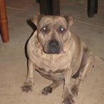 Lyka.. such a sweet dog!