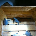 baby sea turtles - waiting to be set out to sea
