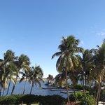 palmeras y sol