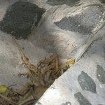 small crab on beach