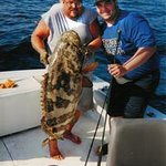 A nice sized Goliath Grouper