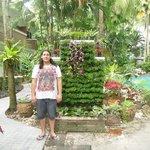 Lovely tropical gardens