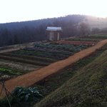 Vegetable gardens at sunset