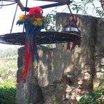 guacamayas exoticas de la selva maya
