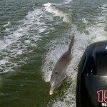 A couple of dolphins followed our boat for several minutes!