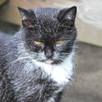 Boots- the Orchard Farm cat