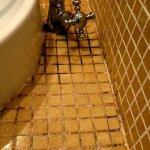 Black mold on bathroom tiles