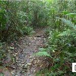 [5] Jungle