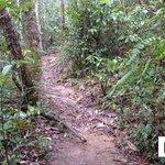 [6] Jungle