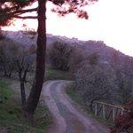 look on Montalcino