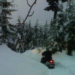Sendero en Cougar Mountain con TAG Whistler