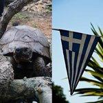 Resident Tortoise
