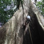 One of our guides climbing up a vine - then WE got to try