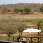 Buffalos seen from the lodge