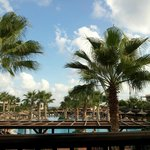 Warm warm weather and palms. Who saide Crete was dry and dusty????