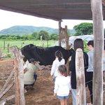 Ordeñe de vacas