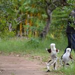 Lemur's Park, Antananarivo