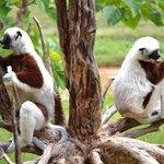 Lemurs Park