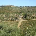 View of the Chianti Vineyards