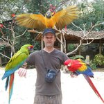 My son Daniel covered in macaws at the interactive centre at Macaw Mountain