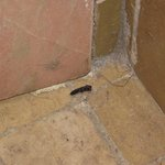 insect droppings in kitchen