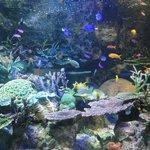 カラフルな魚が泳ぐ「オーストラリアの海」