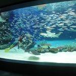 3千匹の魚がいる「サンシャインラグーン」