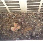 The bird nest under our window.
