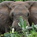 Close to the Addo Elephant National Park