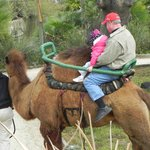 Opa & the Grandbaby riding a camel!