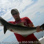 Cobia are a great fighters on the beaches of St. George Island Florida