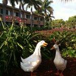 Resort Wildlife