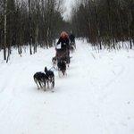Dog sledding at Nature's Kennel