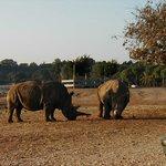 Rhinos.
