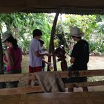 Kids processing sugar cane to make juice