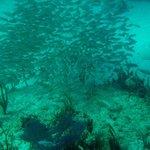 Snorkelling Deadman's Reef