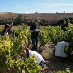 Vinrundture og -smagninger