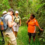 Spirit of the Rainforest Tour - See the rainforest environment through Aboriginal eyes