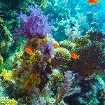 diving jackson reef